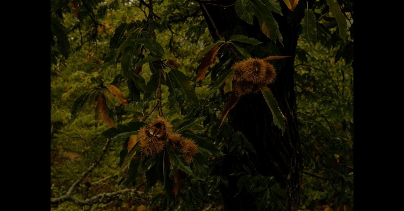 Imagem de cores de outono