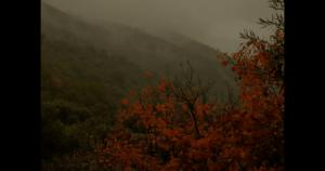 Cores de Outono, de Lucas Tavares – Seleção Ensaios (2020)