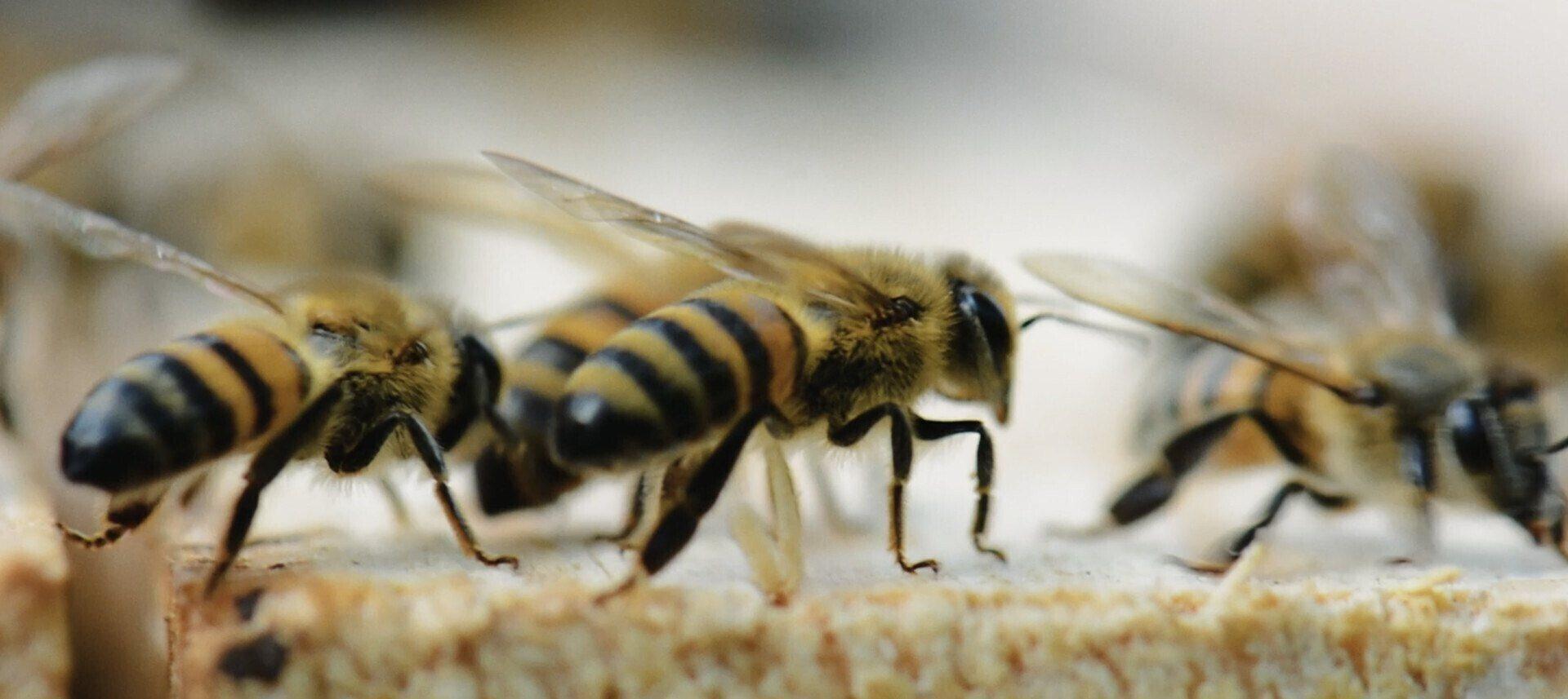 Imagem de My Little Drop of Honey
